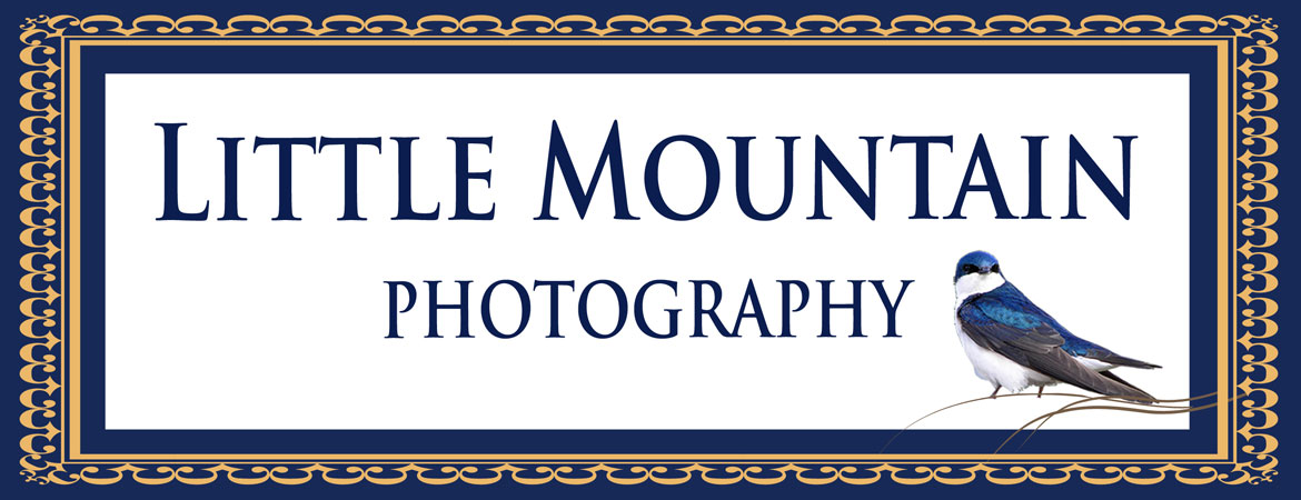 Little Mountain Photography